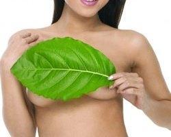Лекарственные растения в лечении мастопатии