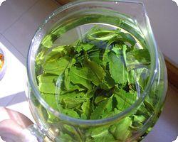 Зеленый чай в борьбе с атеросклерозом